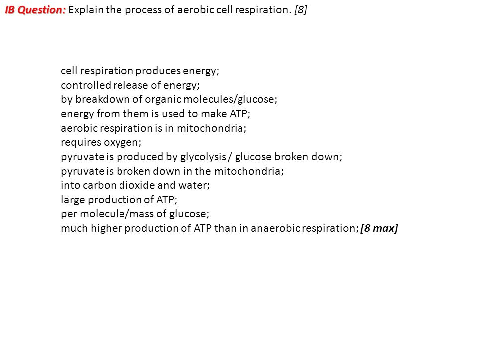 IB Question: Explain the process of aerobic cell respiration. [8]